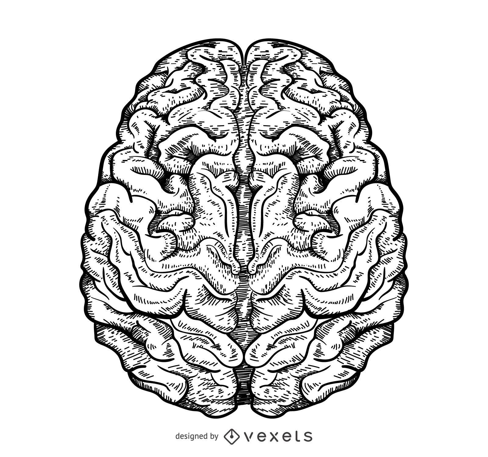 Isolated brain illustration
