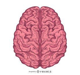 Diseño ilustrado del cerebro aislado
