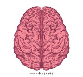 Illustrated brain design isolated