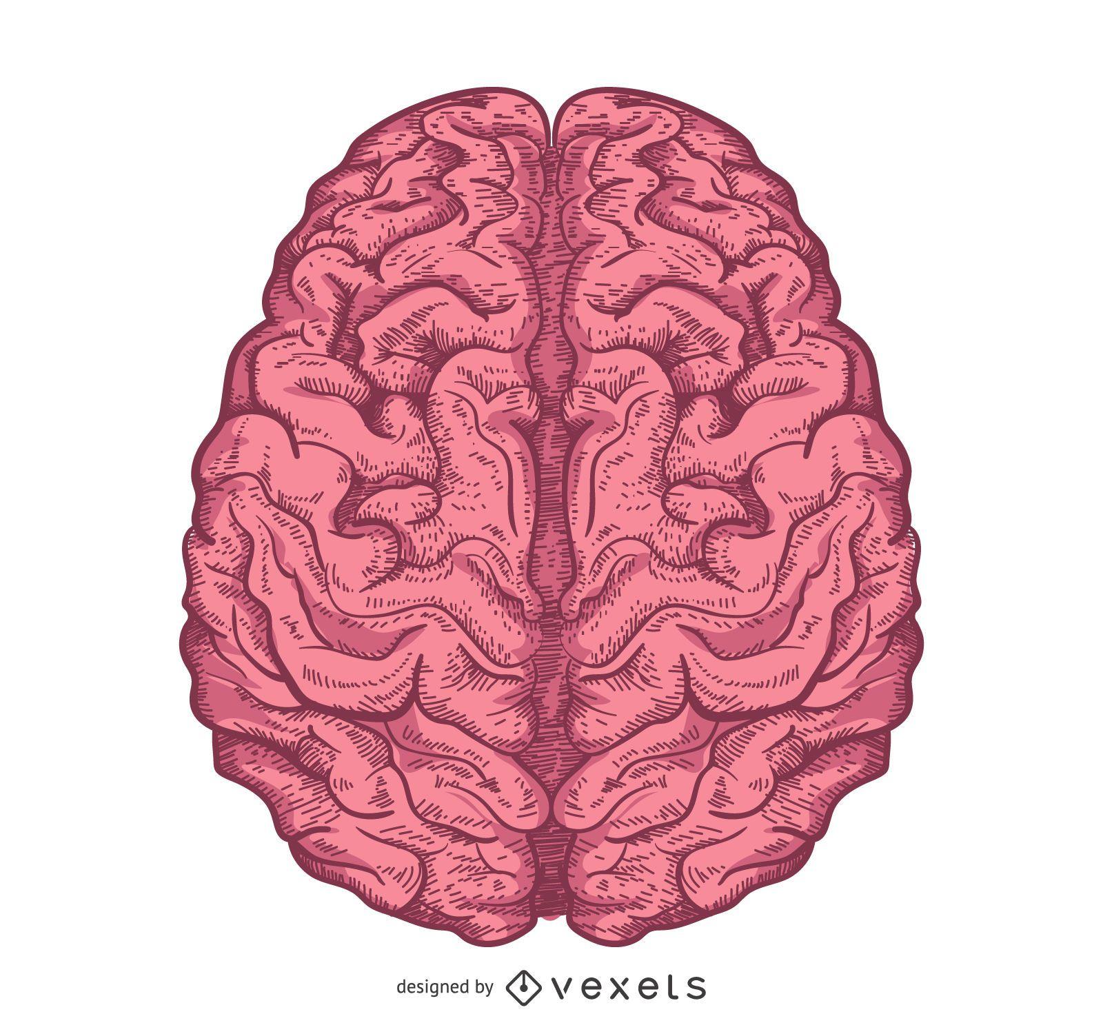 Illustrated brain design isolated