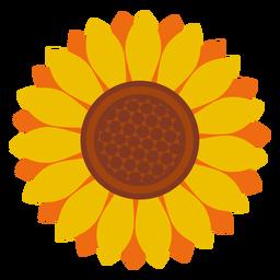 Icono de cabeza de girasol aislado