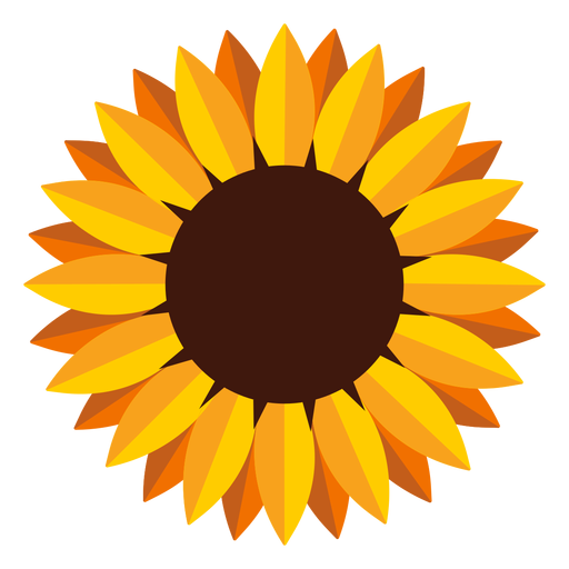 Isolated sunflower head illustration Transparent PNG