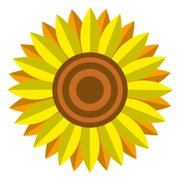 Isolated sunflower head vector