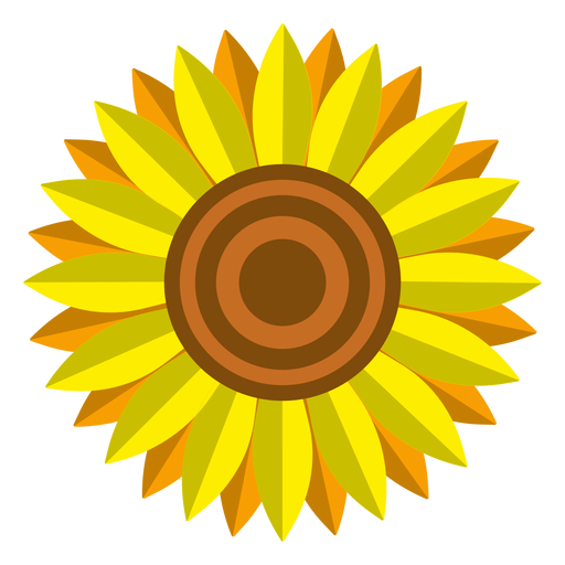 Isolated sunflower head vector Transparent PNG