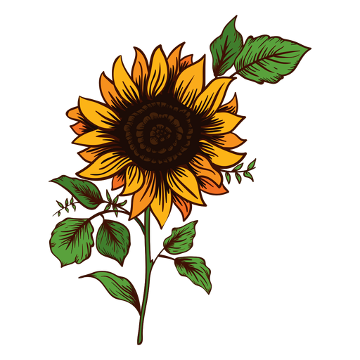 Sunflower drawing Transparent PNG