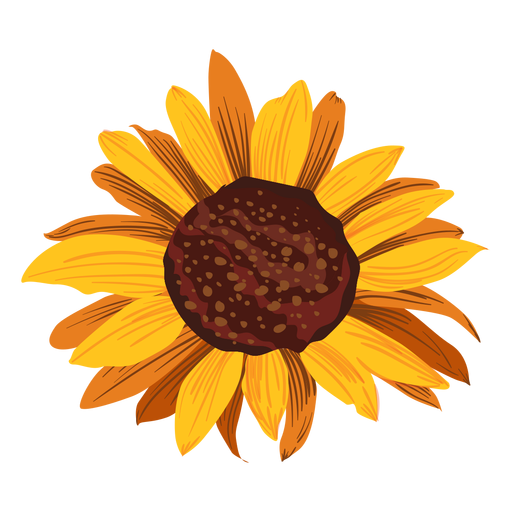 Sunflower head drawing Transparent PNG