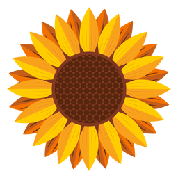 Sunflower head graphic