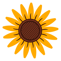 Sunflower head illustration