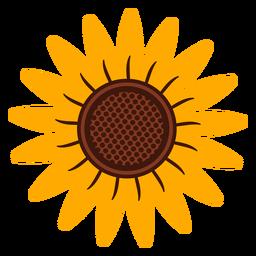 Sunflower head illustration