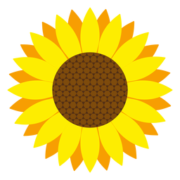 Sunflower head vector