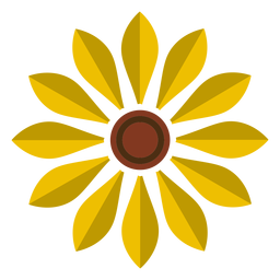 Sunflower head vector graphic