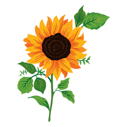 Sonnenblume Abbildung