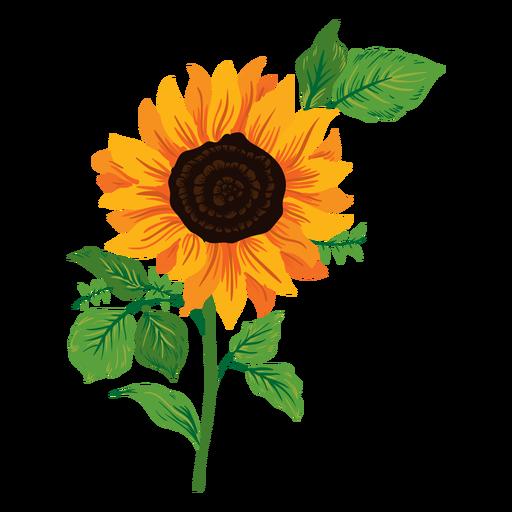 Sunflower illustration Transparent PNG