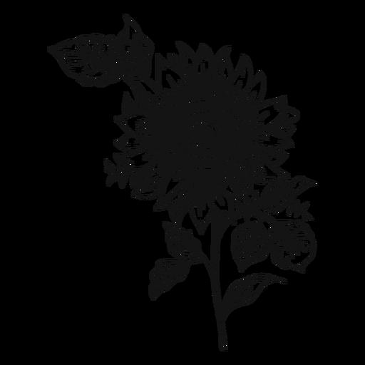 Icono de trazo de girasol Transparent PNG