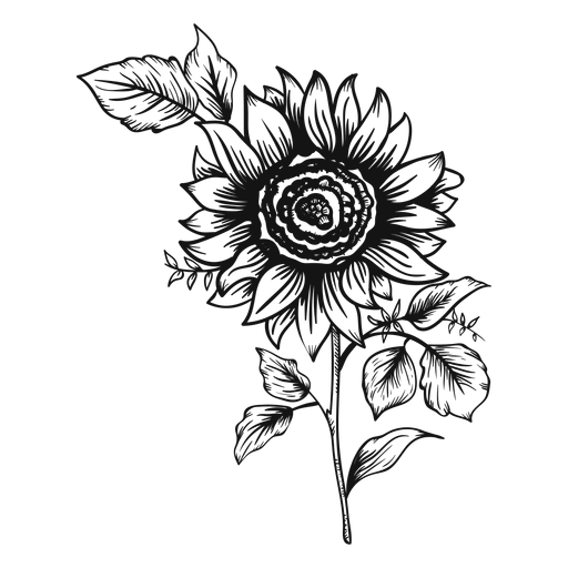 Sunflower stroke icon Transparent PNG
