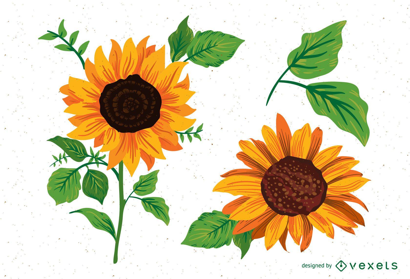 Sunflower illustrations pack