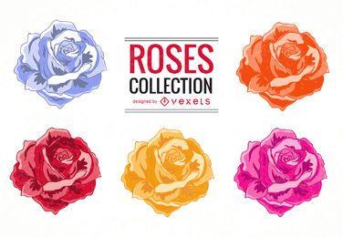 Conjunto de ilustração de rosas coloridas