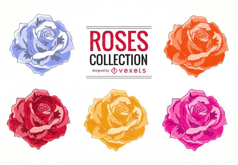 Colorful roses illustration set