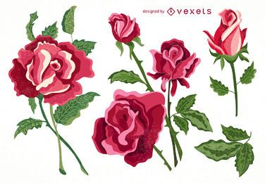 Set der getrennten Rosensammlung