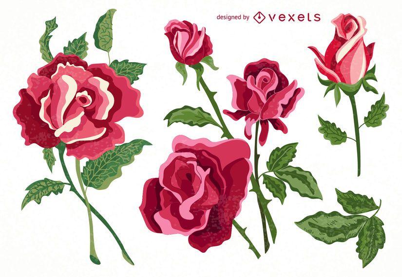 Conjunto de colección de rosas aisladas