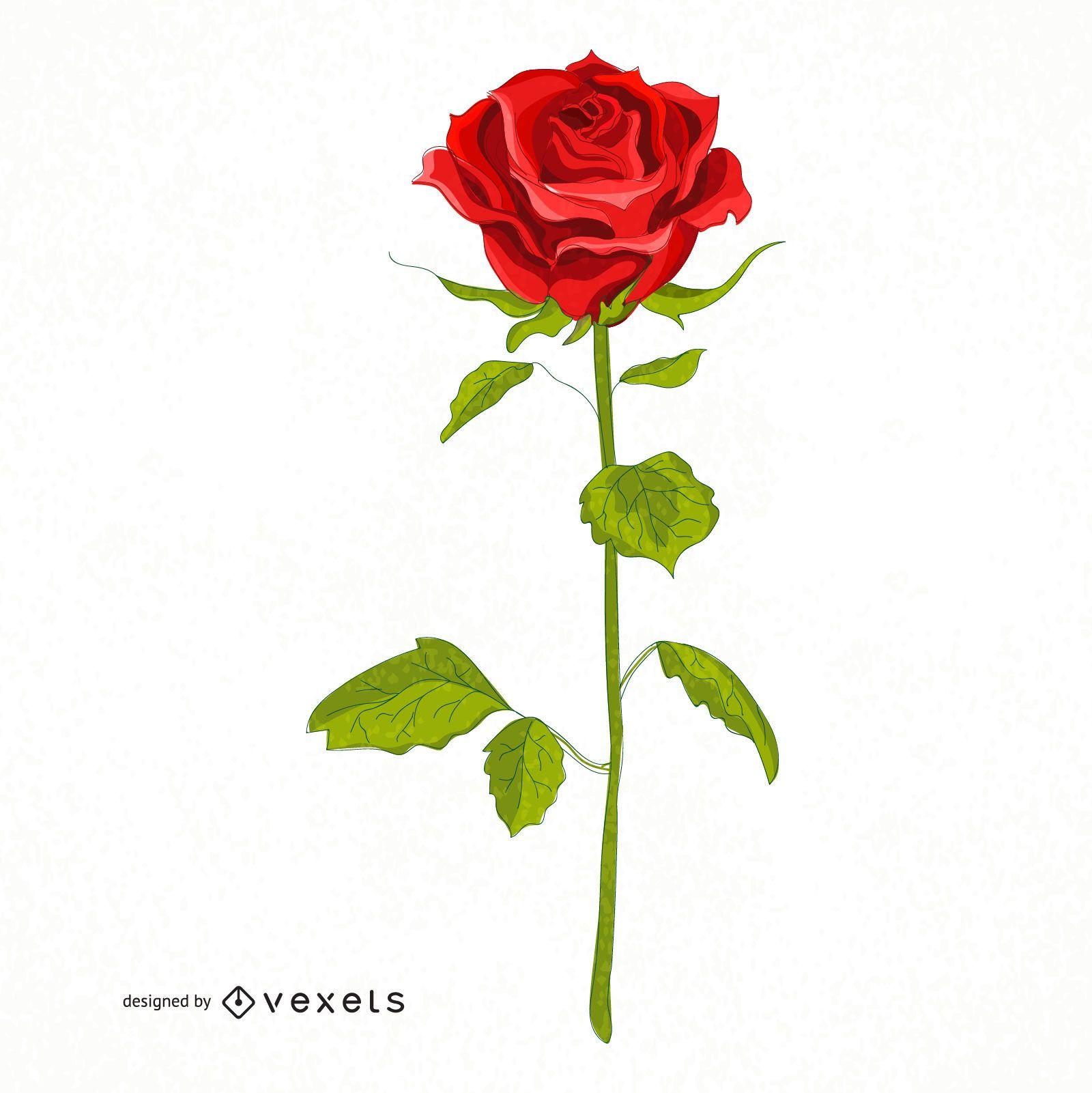 Ilustración de rosa roja