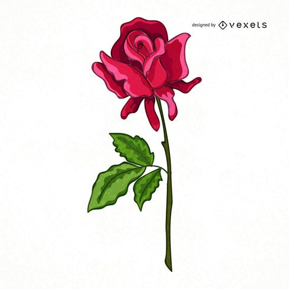 Cute hand drawn rose illustration