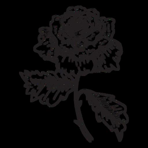 Icono de esbozo de flor color de rosa