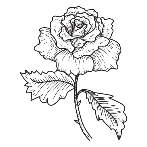 Rose Flower Sketch Icon Transparent Png Svg Vector