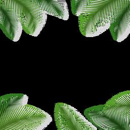 Folhas de palmeira com fundo floral