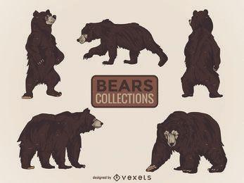 Coleção de urso selvagem ilustrado
