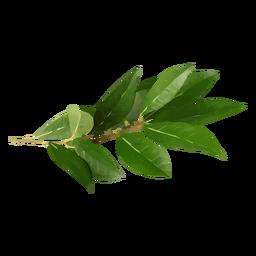 Ilustración de hierba de hoja de laurel