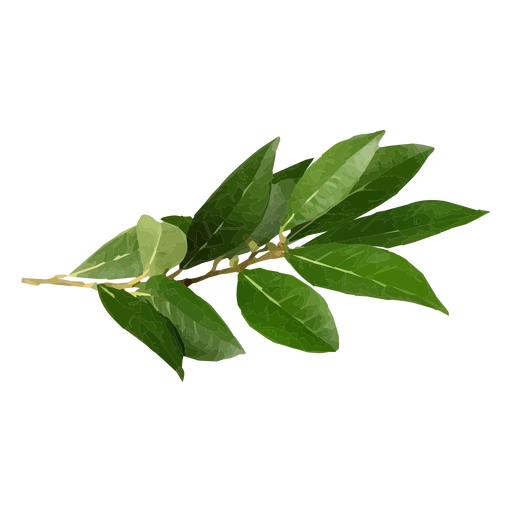 Bay leaf herb illustration Transparent PNG