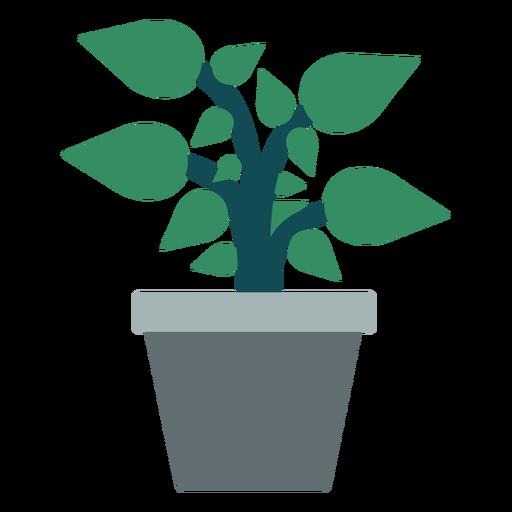 Maceta con planta clipart