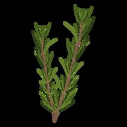 Hojas de hierba de romero