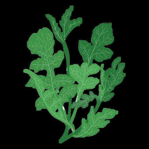 Ilustración de la rúcula rucola hierba Transparent PNG