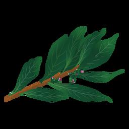 Ilustración de hierba de laurel de bahía