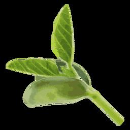 Ilustración de hierba de plántula de frijol