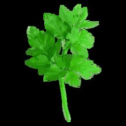 Ilustración de hierba de cilantro cilantro