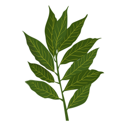 Cinnamon herb illustration
