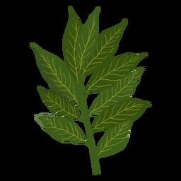 Ilustración de la hierba de canela