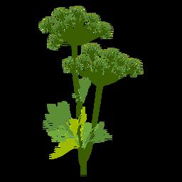 Ilustración de hierba de eneldo