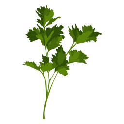 Garden parsley herb illustration