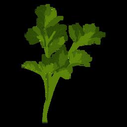 Ilustración de hierba de perejil de jardín