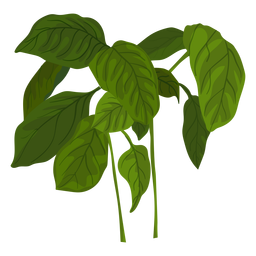 Green basil herb illustration