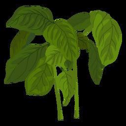 Ilustración de hierba de albahaca verde