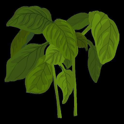 Green basil herb illustration Transparent PNG