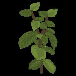 Ilustración de hierba de menta mentha