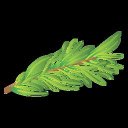 Ilustración de la hierba de romero