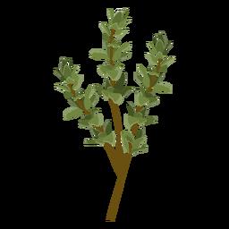 Ilustración de la hierba de tomillo