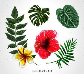 Conjunto de ilustração de plantas tropicais
